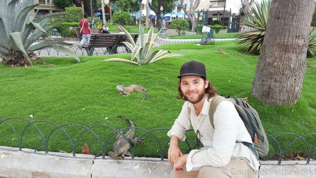 Photo with lizards