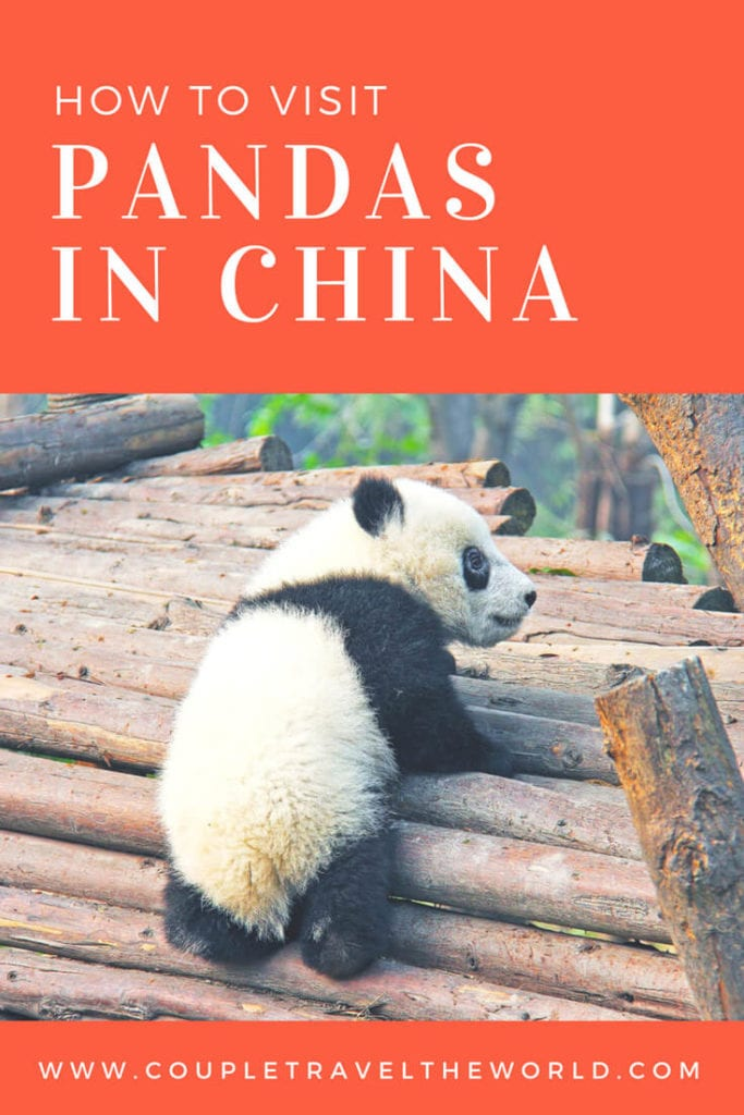 How to see Pandas in Chengdu