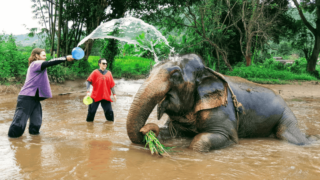 An-image-showing-washing-elephants-the-best-place-to-see-elephants-in-Chiang-Mai
