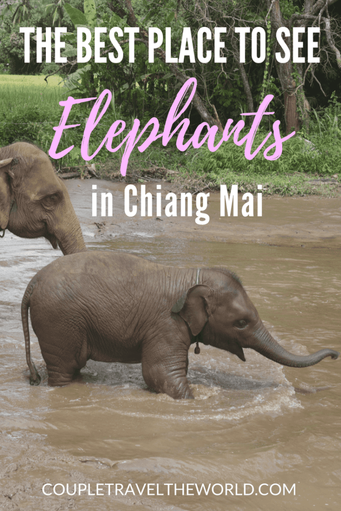 An-image-showing-a-mother-and-baby-elephant-at-Rantong-Chiang-Mai-the-best-place-to-see-elephants-in-Chiang-Mai
