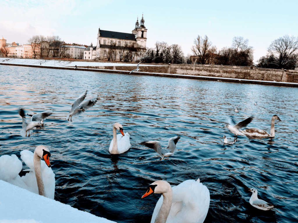 An-image-showing-things-to-do-in-krakow-Vistula-River