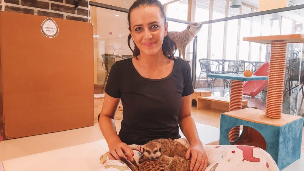 Play with meerkats at Meerkat Friends Seoul