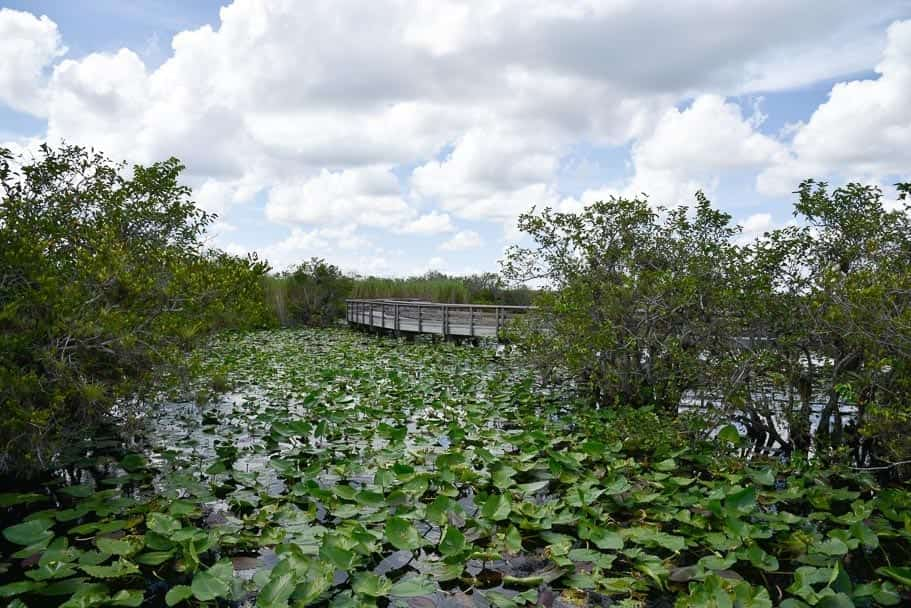 Anhinga Trail Everglades (Alligator Spotting Tips!)