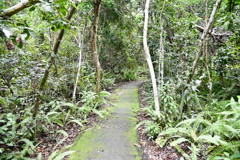 Gumbo Limbo Trail (A shaded paradise in the Everglades Heat!)