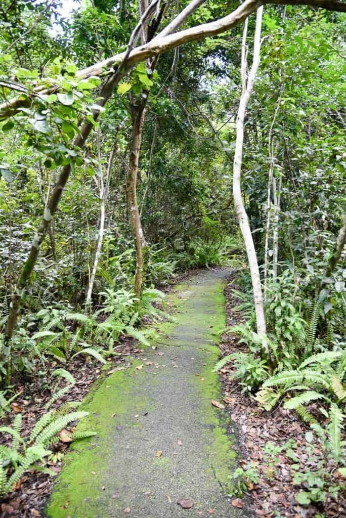 Gumbo-Limbo-trail-everglades-national-park