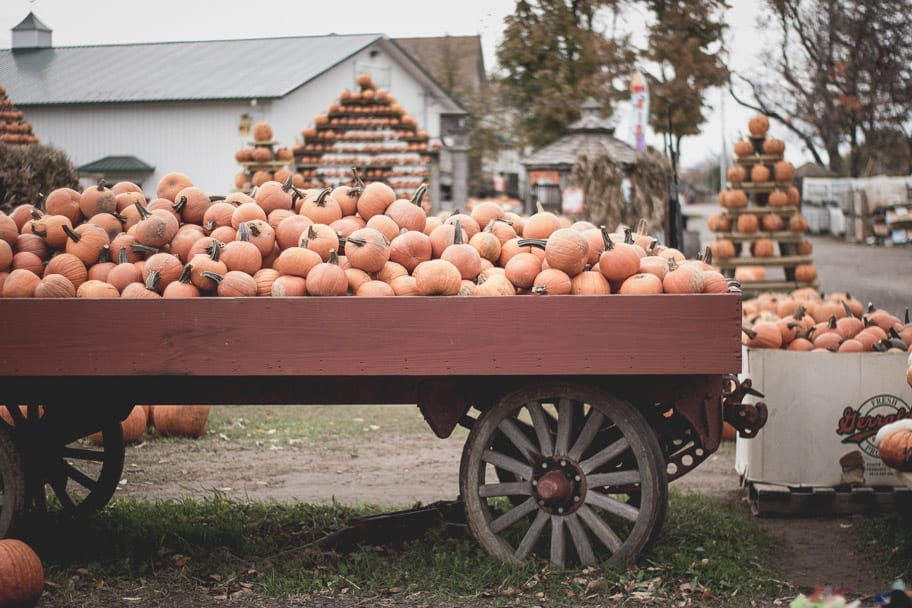7 Delicious Fall Foods You MUST Eat this Fall