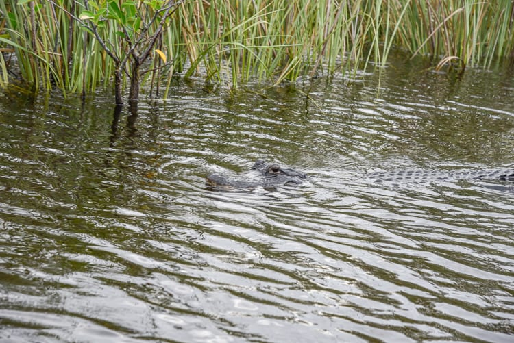 Are airboat tours safe? Any deaths?
