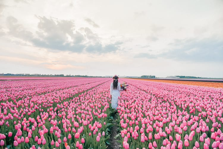 tulip-fields-spring-bucket-list